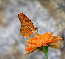Perfect Match - Butterfly on Flower by Tony Wilder