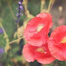 Bold Poppies, Shine Bright by Jo Williams