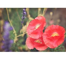 Bold Poppies, Shine Bright Photographic Print