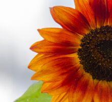 sunflower in the garden Sticker