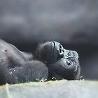 Ape in repose by dangerouslyclos