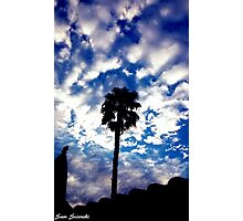 Palm in the Clouds Photographic Print