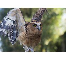 Buffy Fish Owl Photographic Print
