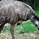 Big Old Emu by Lozzar Landscape
