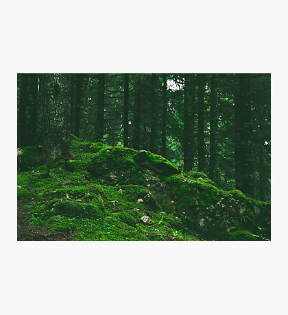 Mound of Moss Photographic Print