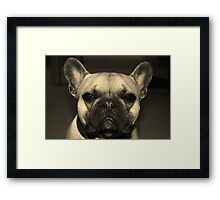 French Bulldog- Zeus Framed Print