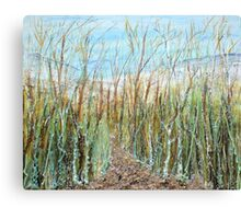 A walk to the dunes Canvas Print