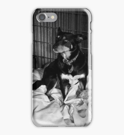 Dog on a wool bale B+W iPhone Case/Skin