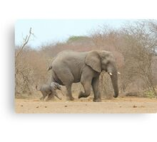 Elephant Love - Keeping up with Dad - African Wildlife Canvas Print