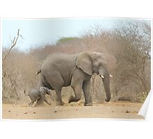 Elephant Love - Keeping up with Dad - African Wildlife Poster