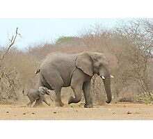 Elephant Love - Keeping up with Dad - African Wildlife Photographic Print