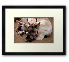 Reindeer waiting for Santa, Happy waiting Framed Print