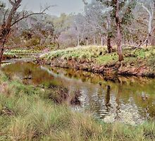 Where The Platypus Play by wallarooimages