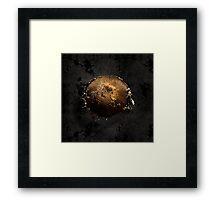 Helianthus Annuus Framed Print