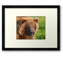 Blond Grizzly Bear Framed Print