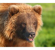 Blond Grizzly Bear Photographic Print