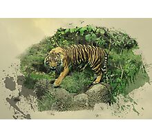 Tiger Territory  Photographic Print