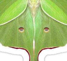 Luna Moth Painting Sticker