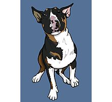 Freddie English Bull Terrier Photographic Print