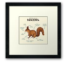 Anatomy of a Squirrel Framed Print