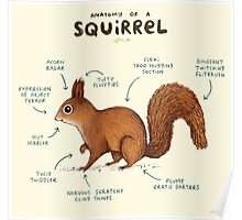 Anatomy of a Squirrel Poster