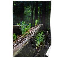 Pine Perks Poster