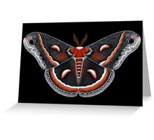 Cecropia Moth Painting Greeting Card