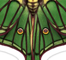 Spanish Moon Moth Painting Sticker