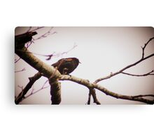 male red winged black bird in a tree Canvas Print