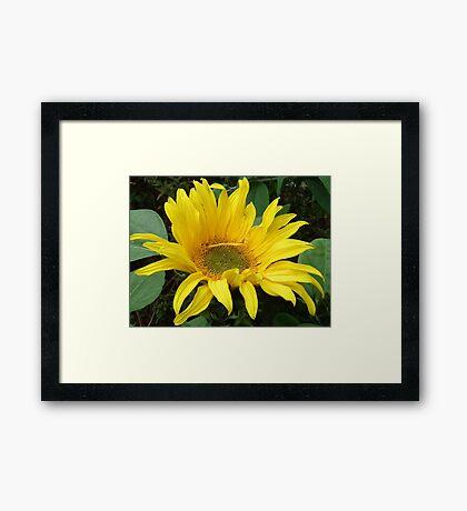 Instant Sunshine Framed Print