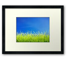 Green lawn grass under blue sky art photo print Framed Print