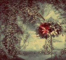 I Never Promised You A Rose Garden by Christine Lake