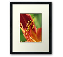 Fairy Footwear Framed Print