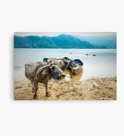 Water Buddies Canvas Print
