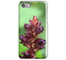 Flowers of the broomrape Orobanche gracilis iPhone Case/Skin