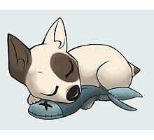 Sleepy Terrier Photographic Print