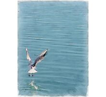 Seagull over the water Photographic Print