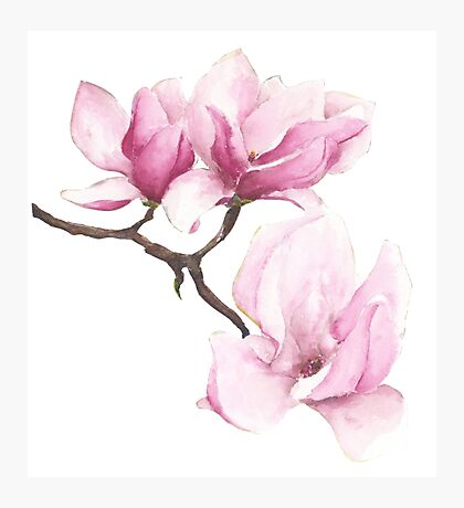 Watercolor Magnolia Blossoms Photographic Print
