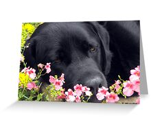 A Bed of Flowers Greeting Card