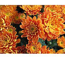 Orange Mums Photographic Print