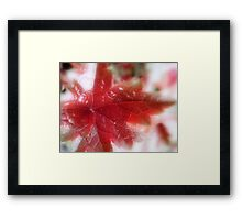 Back Lit Beauty Framed Print