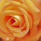Soft Peach by Mariaan M Krog Fine Art Portfolio