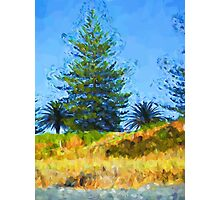 Majestic Trees next to the Beach 2 Photographic Print