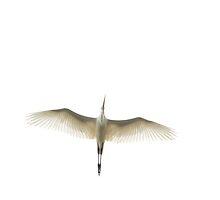 Flying Transparency by RoyceRocks