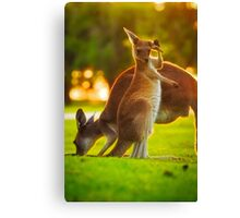 Damn Flies, Yanchep National Park Canvas Print