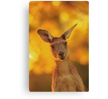 What's Up, Yanchep National Park Canvas Print