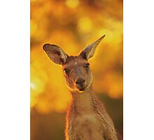 What's Up, Yanchep National Park Photographic Print
