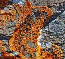 Orange Lichen Sticker