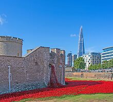 Poppies in the Moat by Chris Thaxter