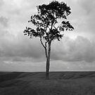 Tree by Stevie B